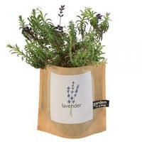 Garden in a Bag: Lavender : Branch: Sustainable Design for Living