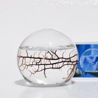 Amazon.com: EcoSphere Closed Aquatic Ecosystem, Small Sphere: Pet Supplies