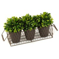 4-pc. Boxwood Topiary Arrangement | Kirkland's