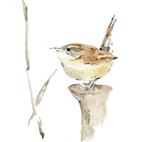 Carolina Wern No. 2, art print of watercolor painting, bird art, wren, Bird lover,south Carolina state bird, nursery decor