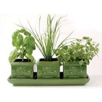 Garden At Home - Italian Herb Trio