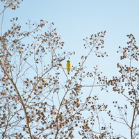little yellow bird Art Print by RichCaspian