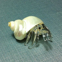 Hand Blown Glass Tiny Hermit Crab Sea Shellfish Animal Cute White Natural Shell Figurine Statue Decoration Collectible Small Craft Hand Made