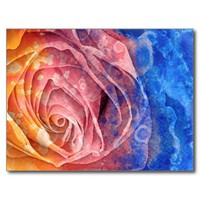 Pretty Colorful Painted Rose Postcard