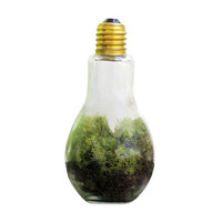 Lightbulb Moment Terrarium Kit