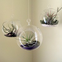 Set of Three Air Plant Globes by seaandasters on Etsy