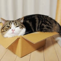 Maru & catnip ball in a box | taildom