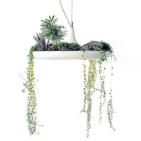 MONOQI | Babylon Plantable Lamp