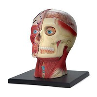 HUMAN HEAD PUZZLE | head puzzle, human head, skull puzzle, human skull | UncommonGoods