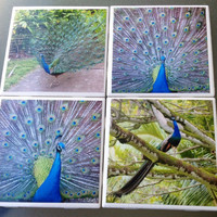 Hawaiian Peacock Photo Coasters