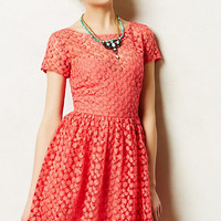 Stitched Blossom Dress