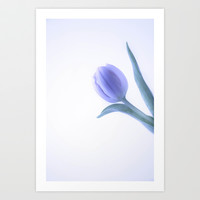 Purple Tulip Art Print by  Alexia Miles photography