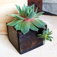 Petite Succulents in Wooden Boxes - Set of 3