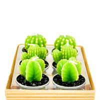 Cacti Tealight Candle Set | LEIF