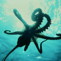 Octopus, Wall Art and Home Décor at Art.com