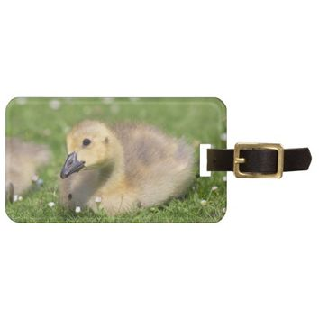 Baby Gosling Luggage Tag