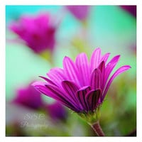 Bright Floral Photography. Floral art. Flowers. Purple. Teal. Aqua. Turquoise. Spring photography. Floral home decor. pop. vibrant. colorful