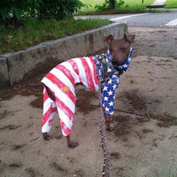 Stars n Stripes Patriotic Summer Cotton Dog Romper by hatz4brats