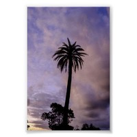 Palm Tree Silhouette Purple Sky