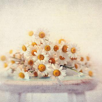 Daisy photograph,fine art print, still life photograph,flower, summer, yellow, white, aqua,pastel,shabby chic decor,floral photo