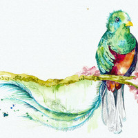 Original Watercolor Painting - Quetzal