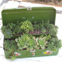 Planted Vintage Tackle Box pottedstore.com