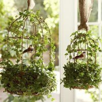 live ivy bird cage