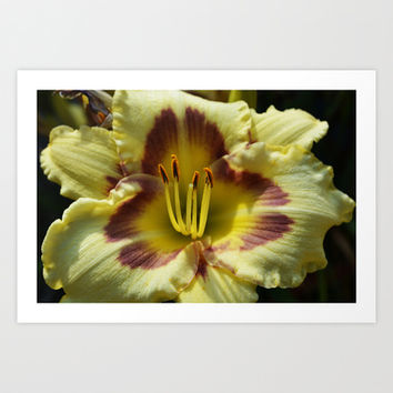 Yellow Daylily Front Art Print by 319media