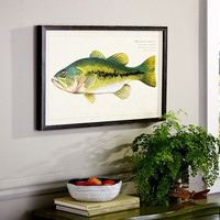 FRAMED BASS PRINT