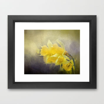 Out of the Darkness - Daffodil Flowers Framed Art Print by Jai Johnson