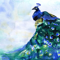 Peacock Watercolor Painting - 24 x 20 - Poster Print