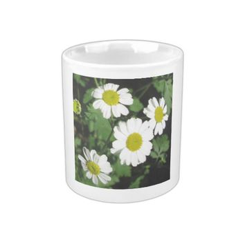 Feverfew Yellow White