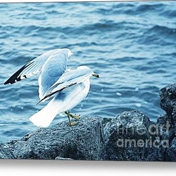 At The Waters Edge Seagull Acrylic Print