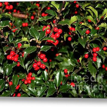 Holly Berries - Blue Girl Acrylic Print