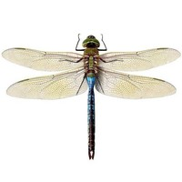Blue Green Dragonfly Vinyl Wall Sticker Decal by WilsonGraphics