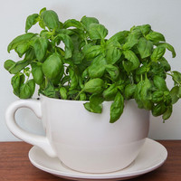 ModCloth Fairytale Cuppa Morning Glory Planter