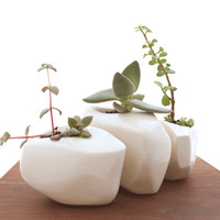 Boulder Succulent Planter - Set of 3