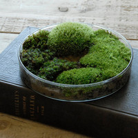 Petri Dish Moss Planter Glass by Vertegris on Etsy