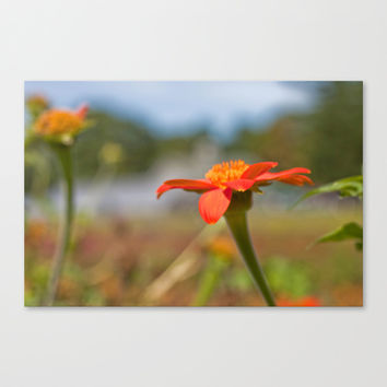 September Flowers Stretched Canvas by Legends of Darkness Photography