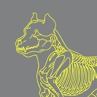 Pit Bull Skeledog Tshirt by skeledog on Etsy