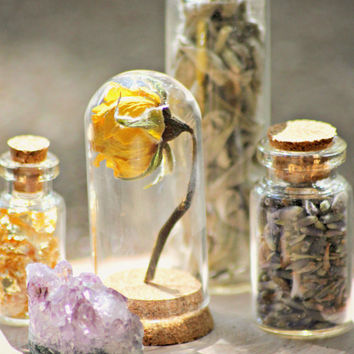 Small Corked Glass Bottles Arrangement Filled with Natural Elements. Desiccated Yellow Rose Display. Forest Theme on Wood Slab.