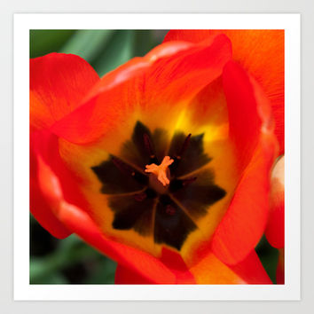 Anatomy of a Tulip, Orange Art Print by Legends of Darkness Photography