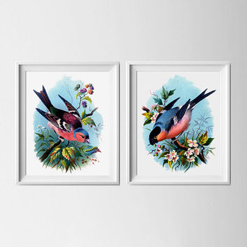 Set of two finches in pink, peach, blue multi-coloured shades. Chaffinch and Bullfinch cute, girly feminine bedroom art prints. Gift for Mum