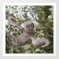 Tree hugging three toed Sloth Art Print by Bruce Stanfield Photographer