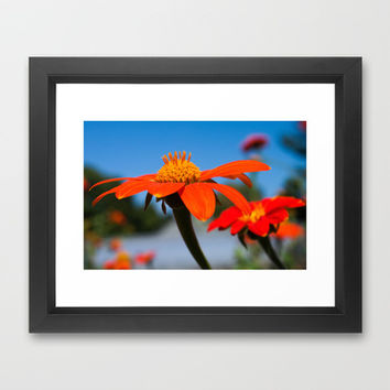Late Summer Blossoms Framed Art Print by Legends of Darkness Photography
