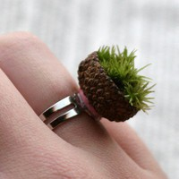 All Natural live moss ring in a real acorn base by mydogandi