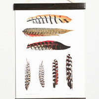 Feathers Hanging Dowel Print