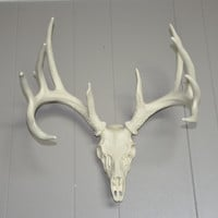 Faux Antler Set, Reproduction Antler Mount, Whitetail Deer Head