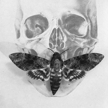 Silence of the Lambs Death's Head Moth Display