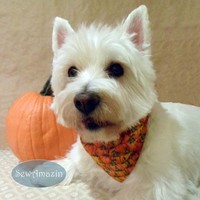 Pumpkin Patch Autumn Harvest Pet Collar Slipcover or Scrunchie Bandana